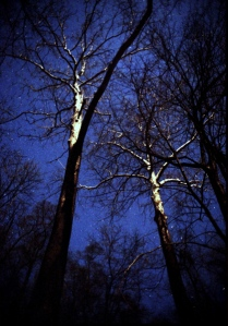 Moon lit trees