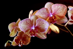 041809-orchid2