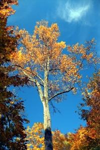 111009_AutumnColors